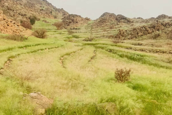 al-baydha project