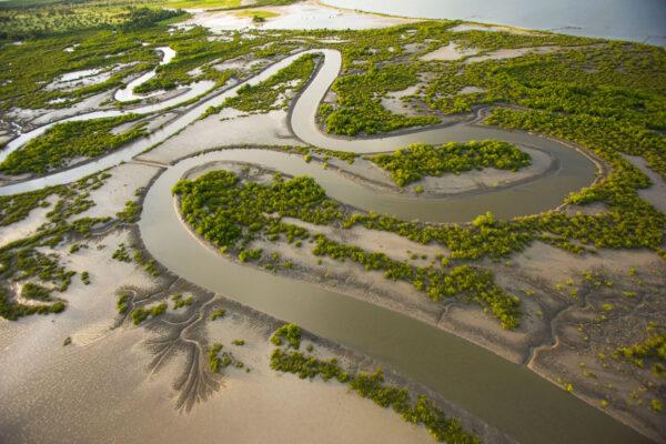 senegal mangrove restoration